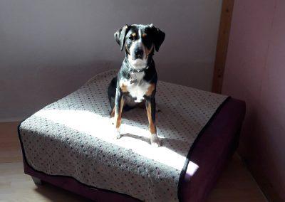 Hundehotel 08 - Hundehotel Studer