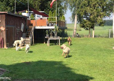 Hundehotel 04 - Hundehotel Studer