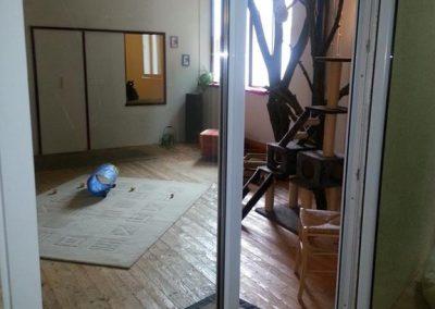 Katzenhaus 06 - Hundehotel Studer