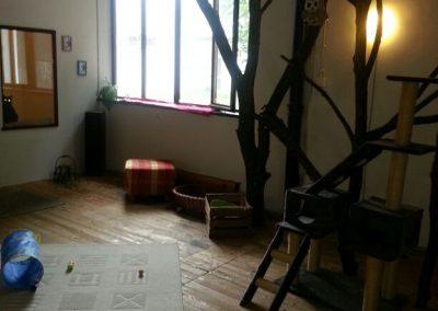 Katzenhaus 03 - Hundehotel Studer