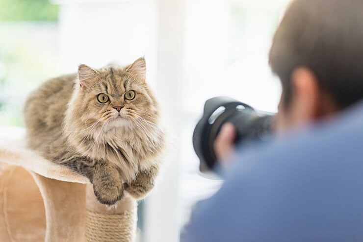 Fotoservice - Hundehotel Studer
