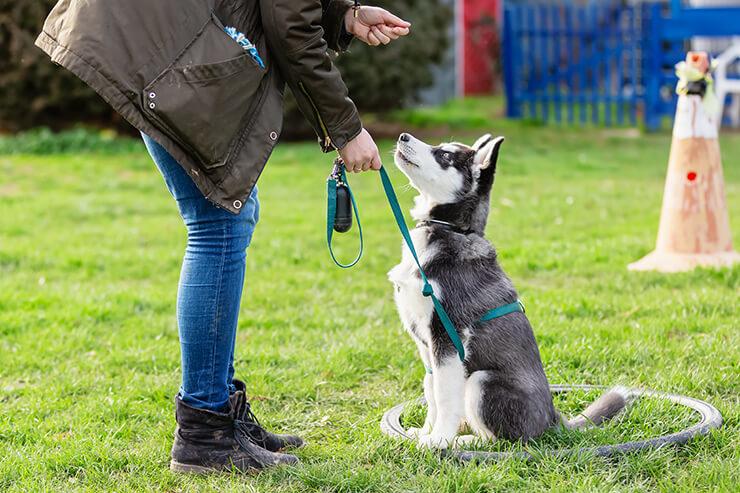 Hundeschule - Hundehotel Studer