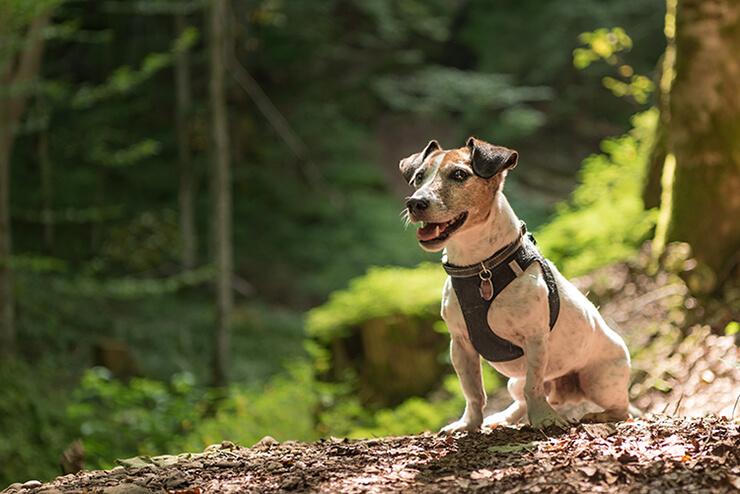 Wanderungen - Hundehotel Studer